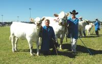 Thumbnail of Ziggy Grand Champion 2008 Dubbo Beef Spectacular