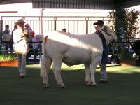 Thumbnail of Zulu Grand Champion 2005 Royal Melbourne